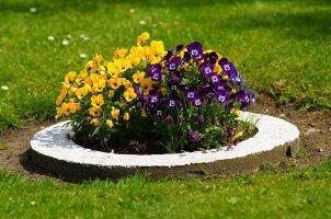 Blumen, Kräuter & Pflanzen